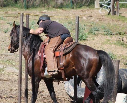 U Cavallu Corsu : Activités sportives – Lecci Endurance et Corti Trec
