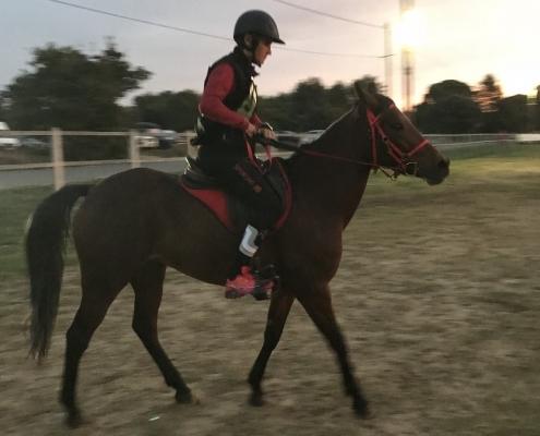 Le Cheval Corse à Uzes : D'alma di Cirnu Endurance Jeunes Chevaux