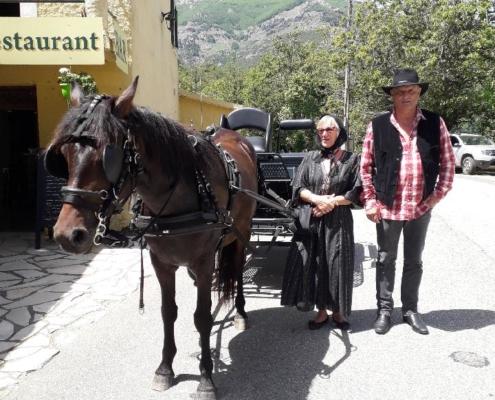 Cheval Corse en attelage : Ballade en calèche pour Corsica
