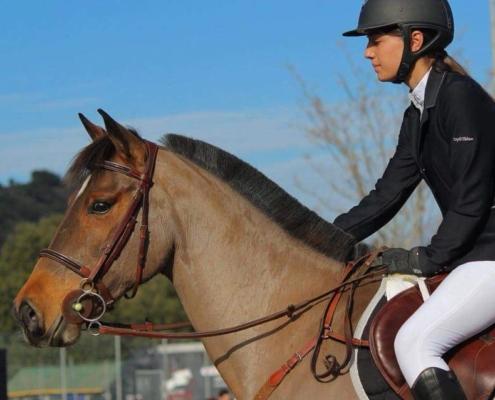 Le Cheval Corse en CSO – Katy jument Corse à Omessa 14 janvier 18