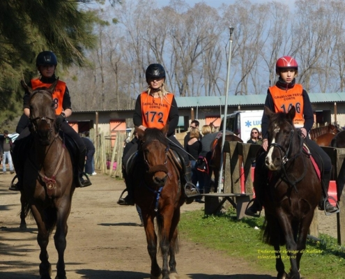 Le Cheval Corse en Endurance – Viscuvatu le 11 février