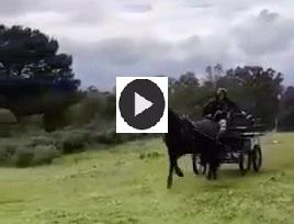 Stage de TREC attelage et monté, 4 chevaux corses y ont participé